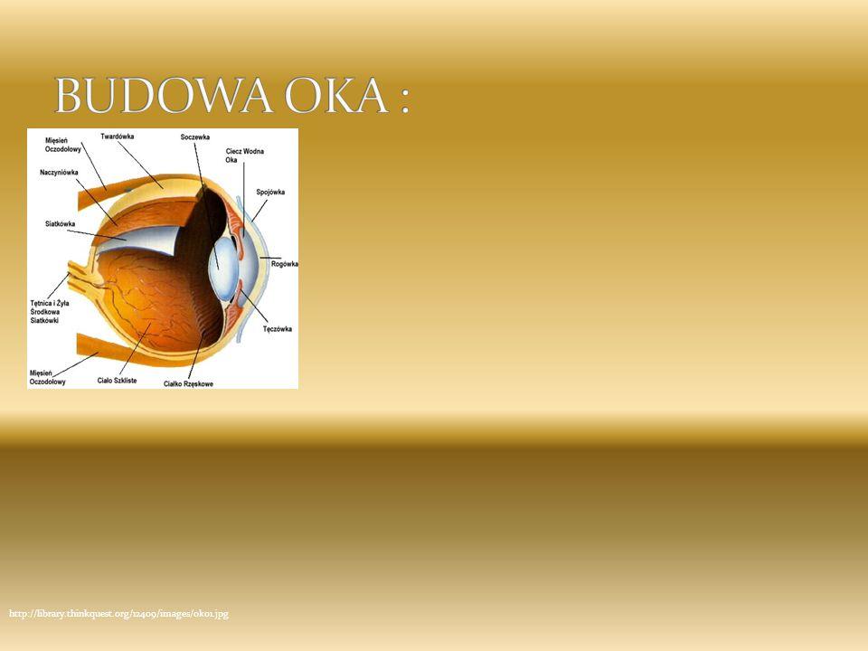 Działanie oka Światło przechodzi przez przednią część twardówki – rogówkę; wpada do oka przez źrenicę regulowaną tęczówką – kolorową częścią oka; przechodzi przez soczewkę, która załamuje promienie świetlne; przechodzi przez ciało szkliste; promienie padają na wewnętrzną warstwę oka – siatkówkę (gdzie powstaje odwrócony obraz), składającą się z fotoreceptorów – czopków (kolor) i pręcików (kształt i ruch).