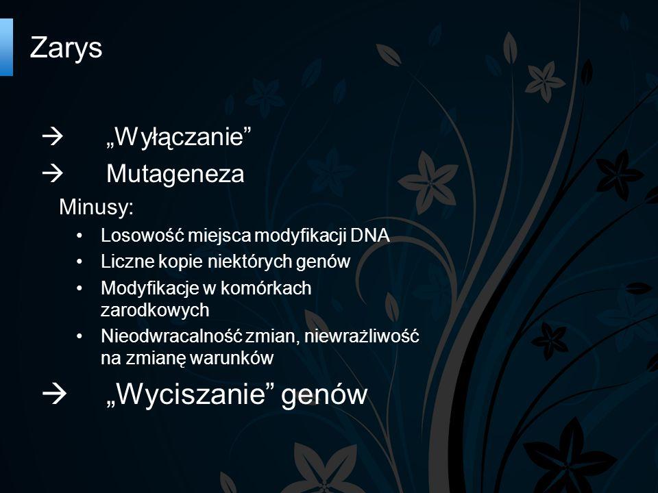 Zarys Wyłączanie Mutageneza Minusy: Losowość miejsca modyfikacji DNA Liczne kopie niektórych genów Modyfikacje w komórkach zarodkowych Nieodwracalność zmian, niewrażliwość na zmianę warunków Wyciszanie genów