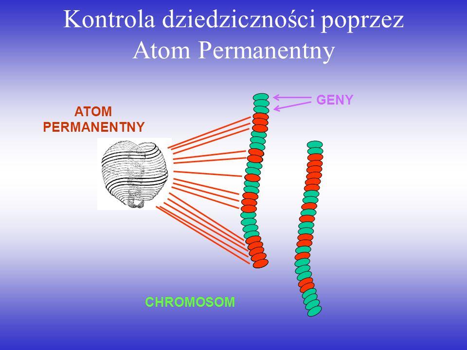 Kontrola dziedziczności poprzez Atom Permanentny ATOM PERMANENTNY CHROMOSOM GENY