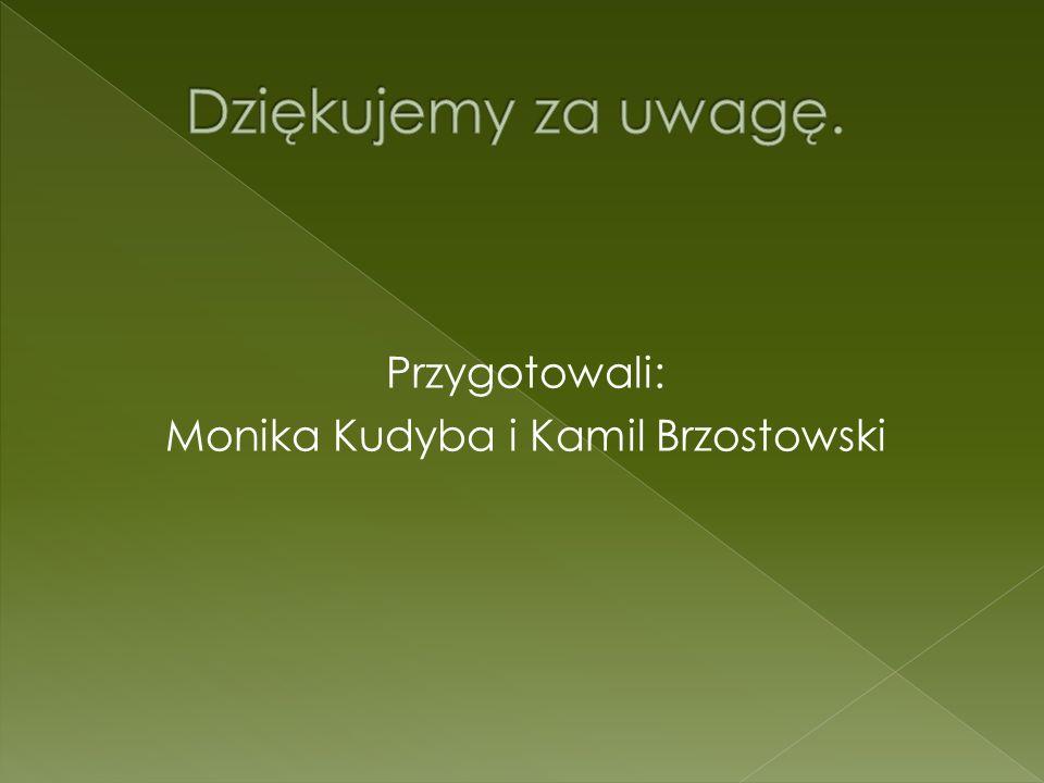 Przygotowali: Monika Kudyba i Kamil Brzostowski