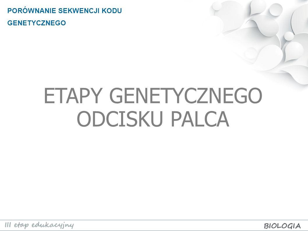 PORÓWNANIE SEKWENCJI KODU GENETYCZNEGO ETAP PIERWSZY Profil genetyczny powstaje na podstawie informacji genetycznej obecnej w śladach biologicznych (krew, ślina, włos, naskórek).