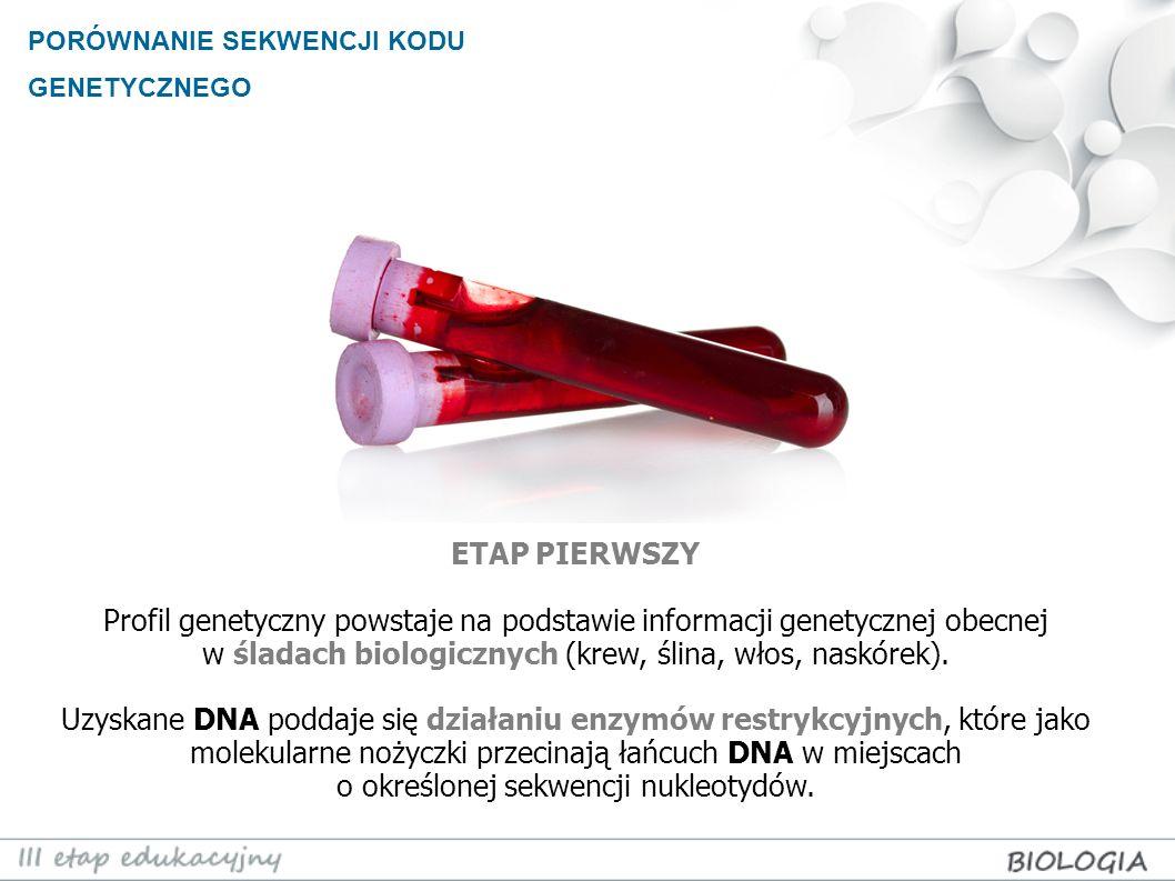 PORÓWNANIE SEKWENCJI KODU GENETYCZNEGO ETAP PIERWSZY Profil genetyczny powstaje na podstawie informacji genetycznej obecnej w śladach biologicznych (k