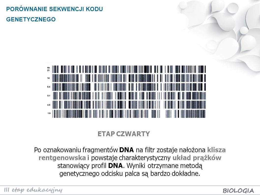PORÓWNANIE SEKWENCJI KODU GENETYCZNEGO Po oznakowaniu fragmentów DNA na filtr zostaje nałożona klisza rentgenowska i powstaje charakterystyczny układ