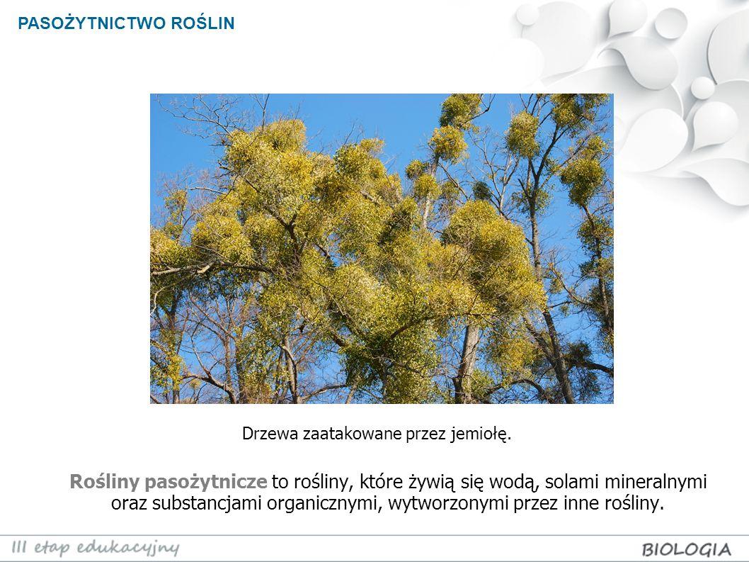 PASOŻYTNICTWO ROŚLIN Świetlik łąkowy (Euphrasia rostkoviana) jest półpasożytem.