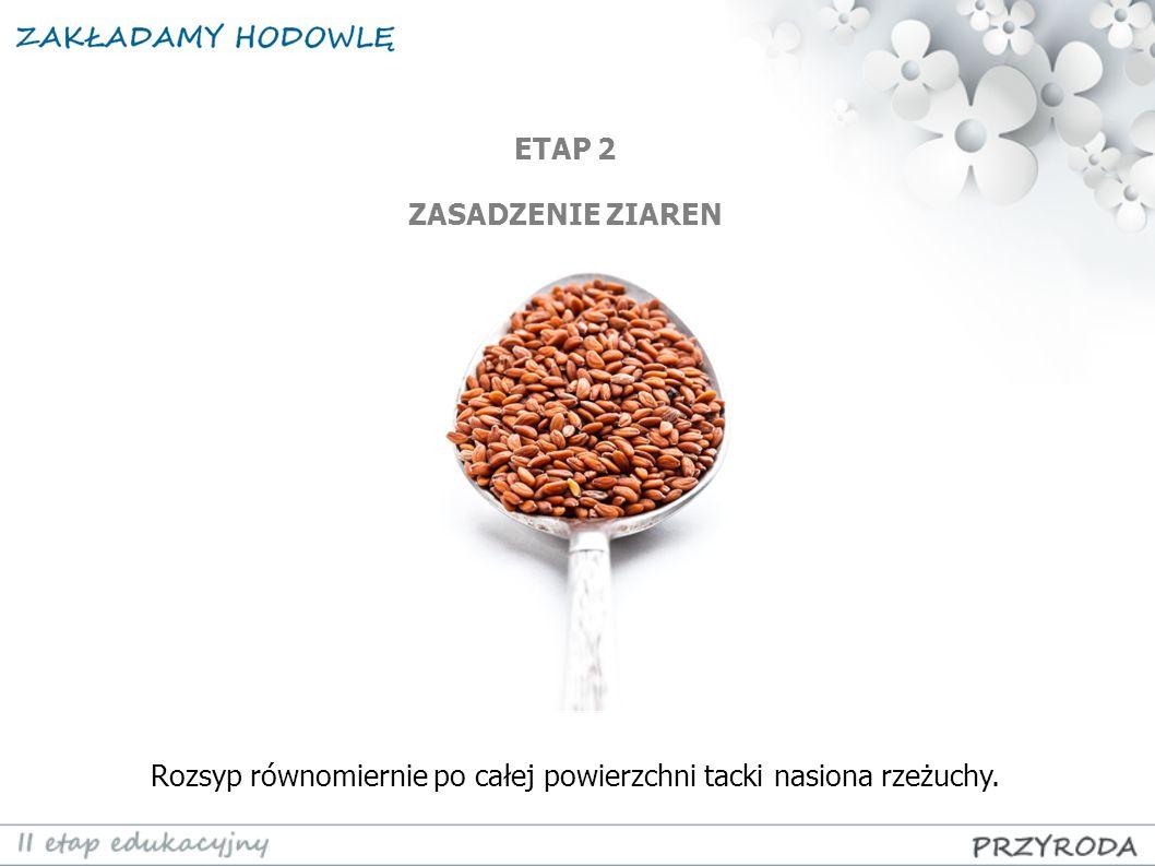 Rozsyp równomiernie po całej powierzchni tacki nasiona rzeżuchy. ETAP 2 ZASADZENIE ZIAREN