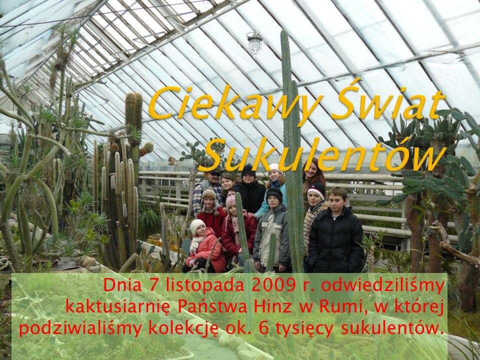 Dnia 7 listopada 2009 r. odwiedziliśmy kaktusiarnię Państwa Hinz w Rumi, w której podziwialiśmy kolekcję ok. 6 tysięcy sukulentów.