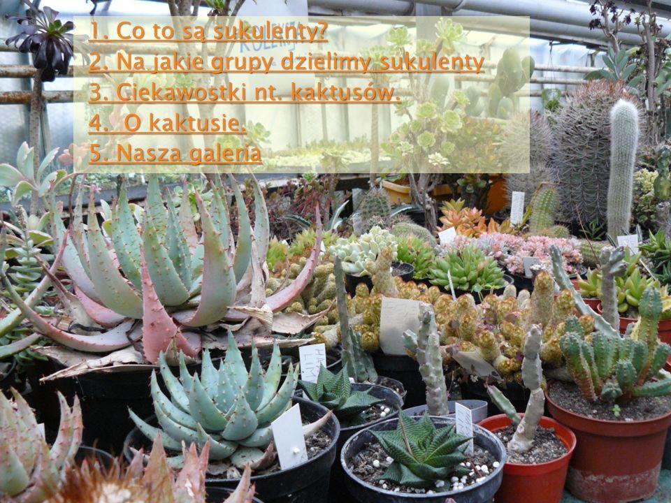 Sukulenty dzielimy na trzy grupy: przypołudniki przypołudniki kaktusy (tak wszyscy nazywają sukulenty) kaktusy (tak wszyscy nazywają sukulenty) inne sukulenty inne sukulenty Powrót do menu