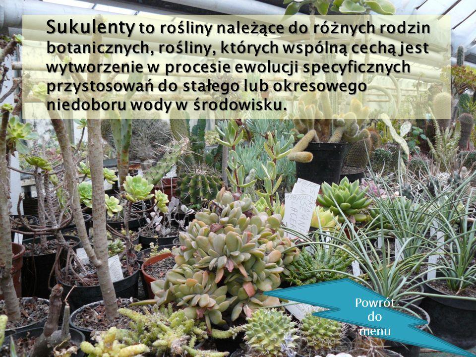 Sukulenty to rośliny należące do różnych rodzin botanicznych, rośliny, których wspólną cechą jest wytworzenie w procesie ewolucji specyficznych przyst