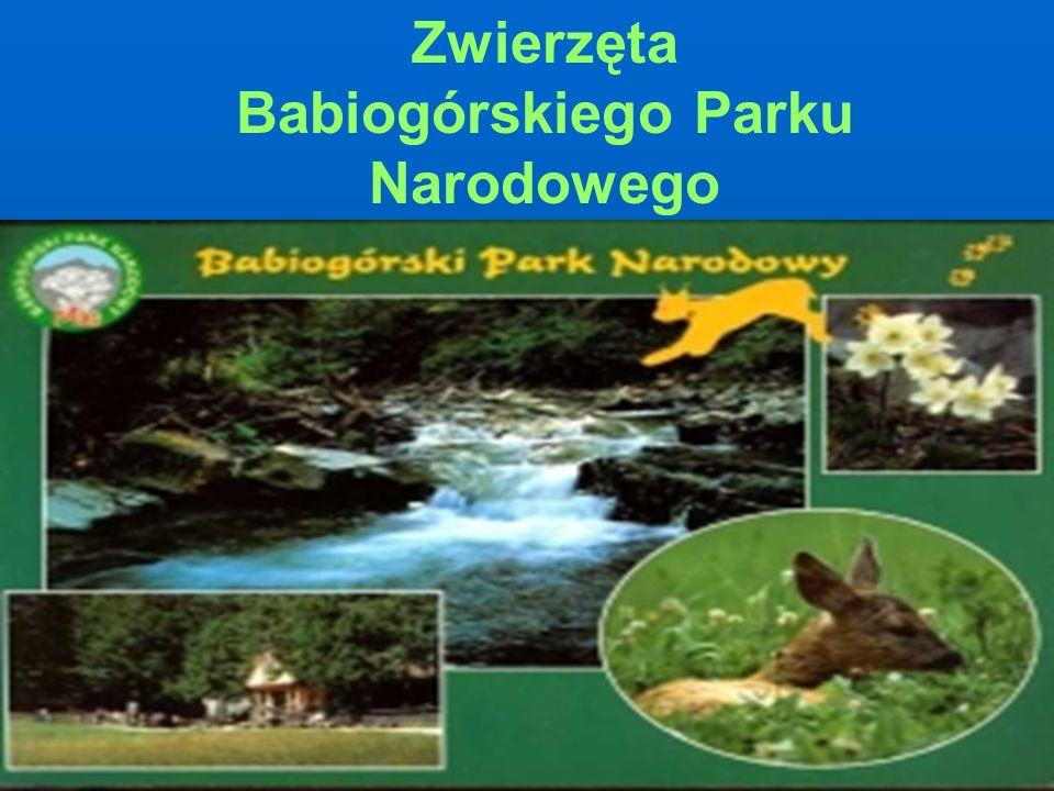 Dziękujemy za oglądanie i zapraszamy do Babiogórskiego Parku Narodowego