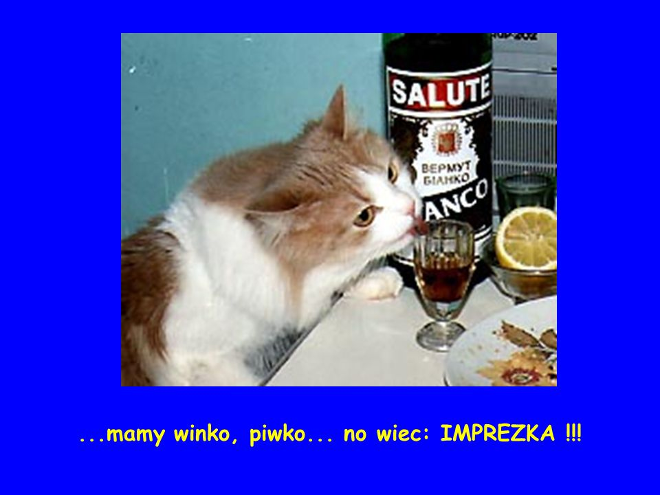 ...mamy winko, piwko... no wiec: IMPREZKA !!!