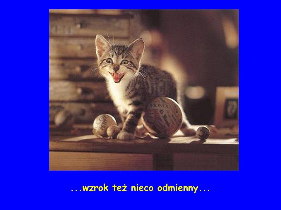 Cześć!!! Oficjalna strona Paszczak®`a http://paszczak2003.w.interia.pl ZAPRASZAM PONOWNIE !!!