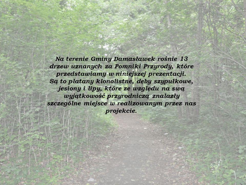 Na terenie Gminy Damasławek rośnie 13 drzew uznanych za Pomniki Przyrody, które przedstawiamy w niniejszej prezentacji. Są to platany klonolistne, dęb