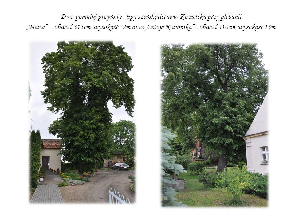 Dwa pomniki przyrody - lipy szerokolistne w Kozielsku przy plebanii. Maria - obwód 315cm, wysokość 22m oraz Ostoja Kanonika - obwód 310cm, wysokość 13