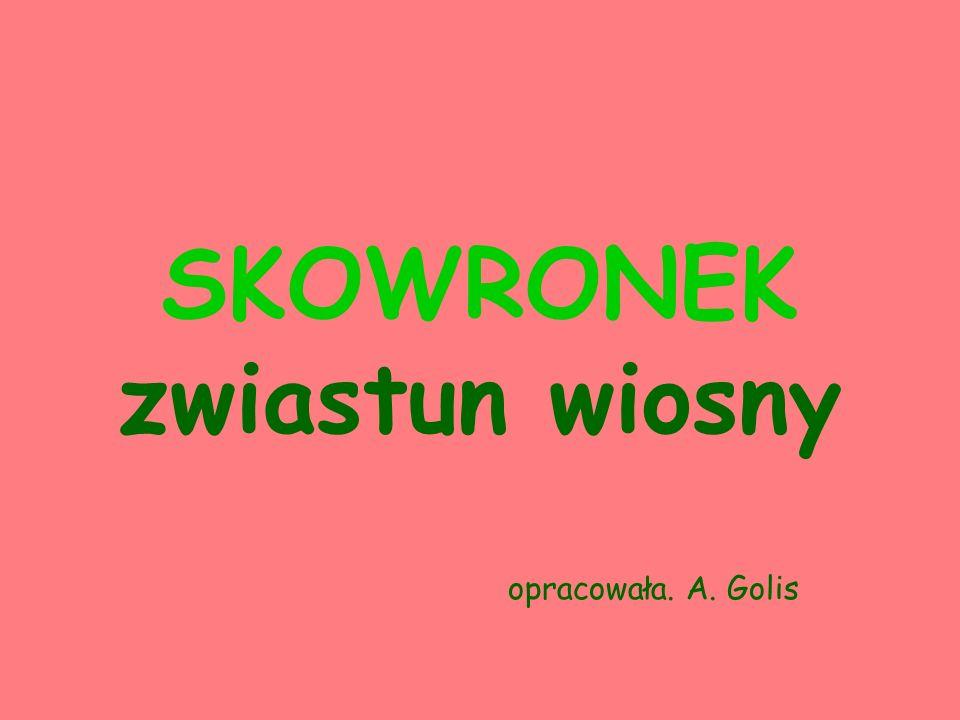 SKOWRONEK zwiastun wiosny opracowała. A. Golis
