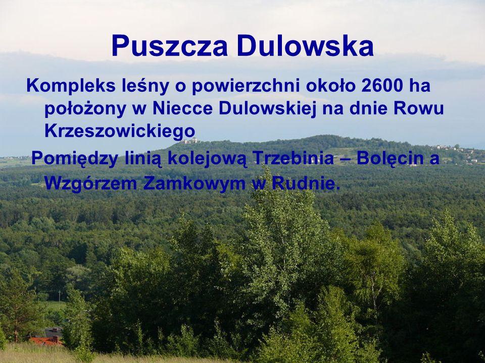 Puszcza Dulowska Kompleks leśny o powierzchni około 2600 ha położony w Niecce Dulowskiej na dnie Rowu Krzeszowickiego Pomiędzy linią kolejową Trzebini