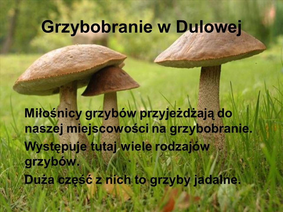 Grzybobranie w Dulowej Miłośnicy grzybów przyjeżdżają do naszej miejscowości na grzybobranie. Występuje tutaj wiele rodzajów grzybów. Duża część z nic