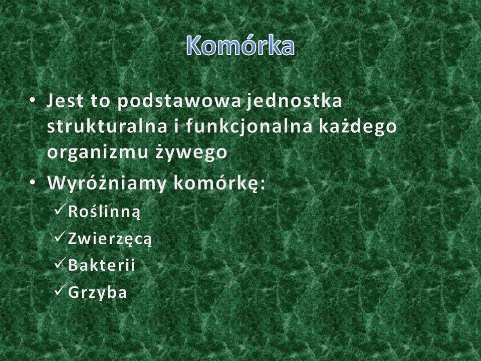 OrganelleKomórka roślinna Komórka zwierzęca Komórka bakterii Komórka grzyba ŚcianaWystępujeNie występujeWystępuje BłonaWystępuje JądroWystępuje Substancja jądrowa Występuje WodniczkaWystępuje ChloroplastWystępujeNie występuje MitochondriumWystępuje CytoplazmaWystępuje Aparat Golgiego Występuje Błona śluzowaNie występuje WystępujeNie występuje