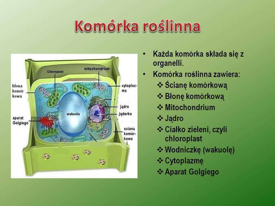 Każda komórka składa się z organelli.