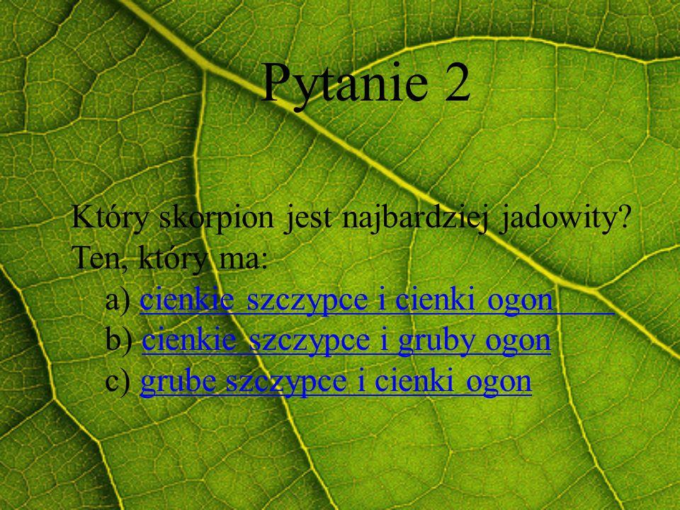 Pytanie 2 Który skorpion jest najbardziej jadowity? Ten, który ma: a) cienkie szczypce i cienki ogoncienkie szczypce i cienki ogon b) cienkie szczypce