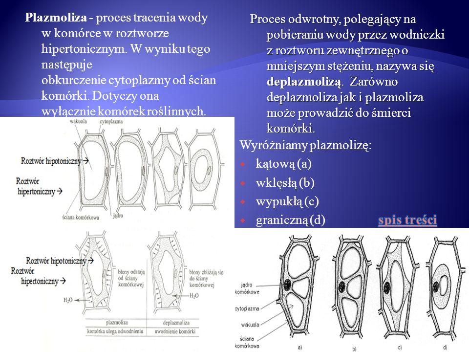 tkanki stałe tkanki miękiszowe: miękisz zasadniczy miękisz powietrzny (aerenchyma) miękisz wodny miękisz asymilacyjny (palisadowy, gąbczasty i wieloramienny) miękisz rdzeniowy (drzewny i łykowy) miękisz spichrzowy tkanki przewodzące: drewno (ksylem) łyko (floem) tkanki okrywające: pierwotne: ryzoderma (epiblema) – skórka korzenia Epiderma -skórka pędu Endoderma (śródskórnia) egzoderma (skórnia) wtórne: korek tkanki wzmacniające: kolenchyma (zwarcica) sklerenchyma (twardzica): stereidy – włókna sklerenchymatyczne sklereidy – twardziczki