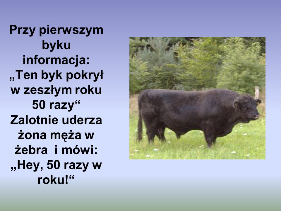 Przy pierwszym byku informacja: Ten byk pokrył w zeszłym roku 50 razy Zalotnie uderza żona męża w żebra i mówi: Hey, 50 razy w roku!