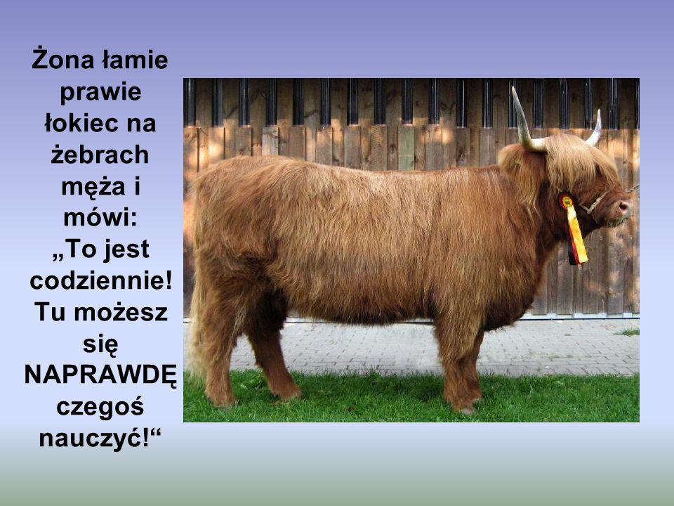 Mąż patrzy na nią z ironicznym uśmieszkiem i mówi : Zapytaj się tego byka czy robił to zawsze z tą samą KROWĄ!