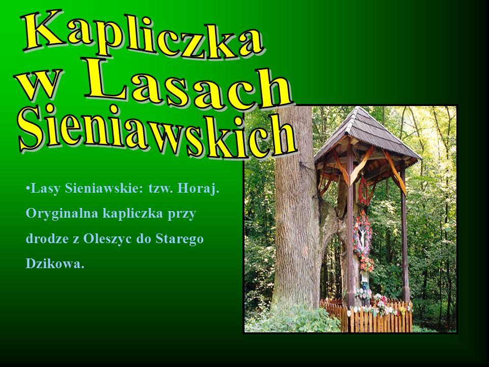 Lasy Sieniawskie: tzw. Horaj. Oryginalna kapliczka przy drodze z Oleszyc do Starego Dzikowa.