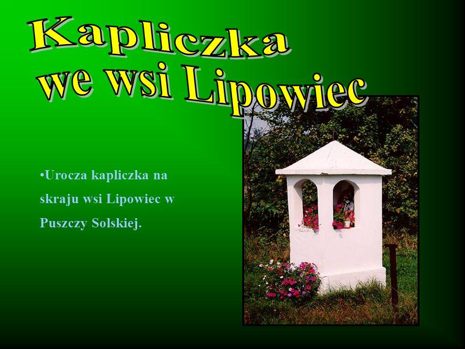 Urocza kapliczka na skraju wsi Lipowiec w Puszczy Solskiej.
