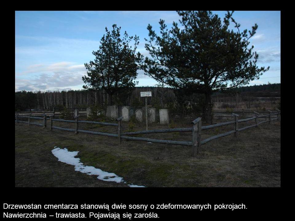 Drzewostan cmentarza stanowią dwie sosny o zdeformowanych pokrojach. Nawierzchnia – trawiasta. Pojawiają się zarośla.