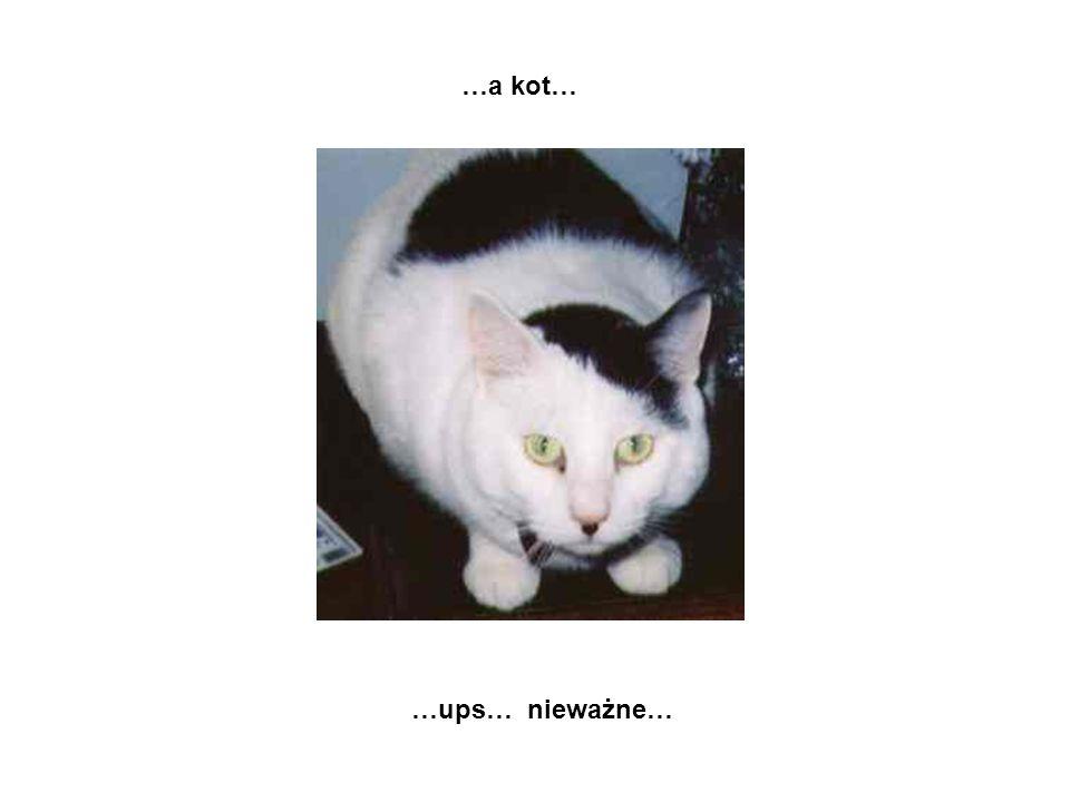 …a kot… …ups… nieważne…