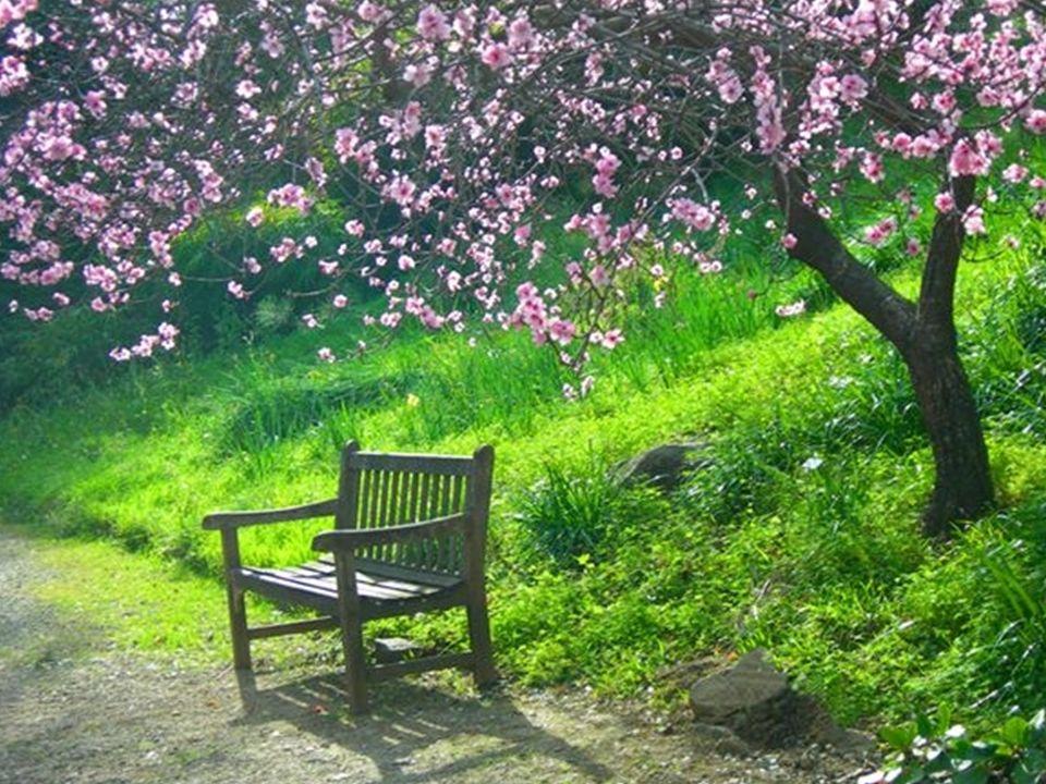 Mały kwiat ta melodia bez słów przypomina nasz skwer i ławeczkę wśród bzów, ciepłą noc, cichy sad, ulubiony twój wiersz przyniesiony ci kwiat,