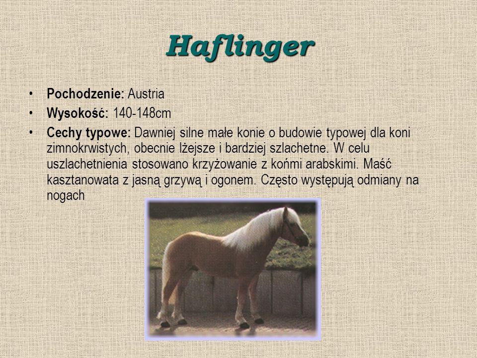 Haflinger Pochodzenie: Austria Wysokość: 140-148cm Cechy typowe: Dawniej silne małe konie o budowie typowej dla koni zimnokrwistych, obecnie lżejsze i bardziej szlachetne.
