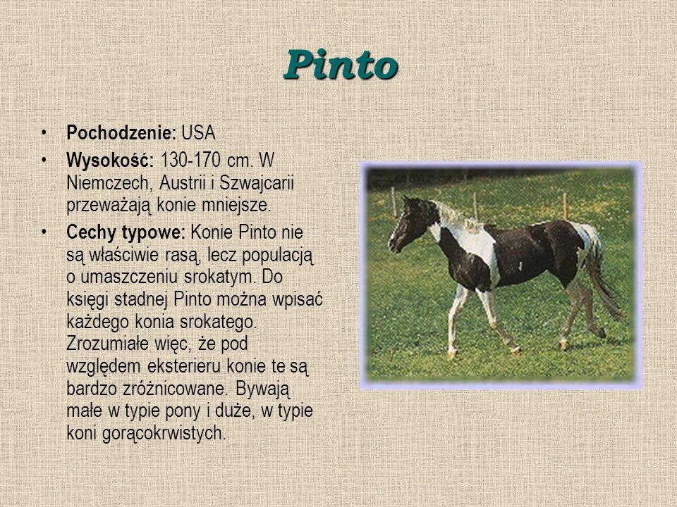 Pinto Pochodzenie: USA Wysokość: 130-170 cm.