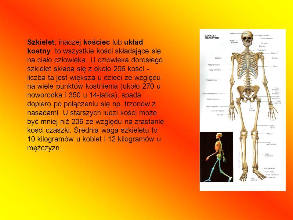 Szkielet, inaczej kościec lub układ kostny to wszystkie kości składające się na ciało człowieka. U człowieka dorosłego szkielet składa się z około 206