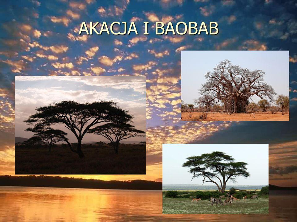 AKACJA I BAOBAB