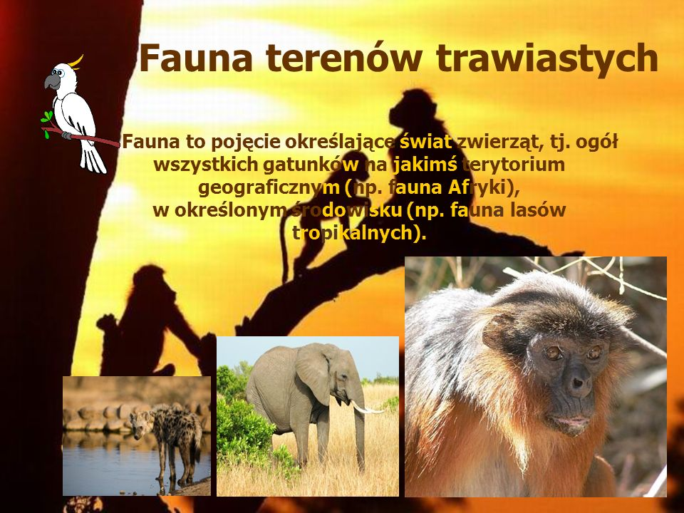 Fauna terenów trawiastych Fauna to pojęcie określające świat zwierząt, tj. ogół wszystkich gatunków na jakimś terytorium geograficznym (np. fauna Afry