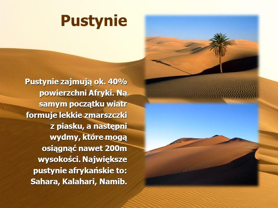 Sawanny Około 40% tego kontynentu pokrywa sawanna – trawiaste obszary z pojedynczymi drzewami i zaroślami.