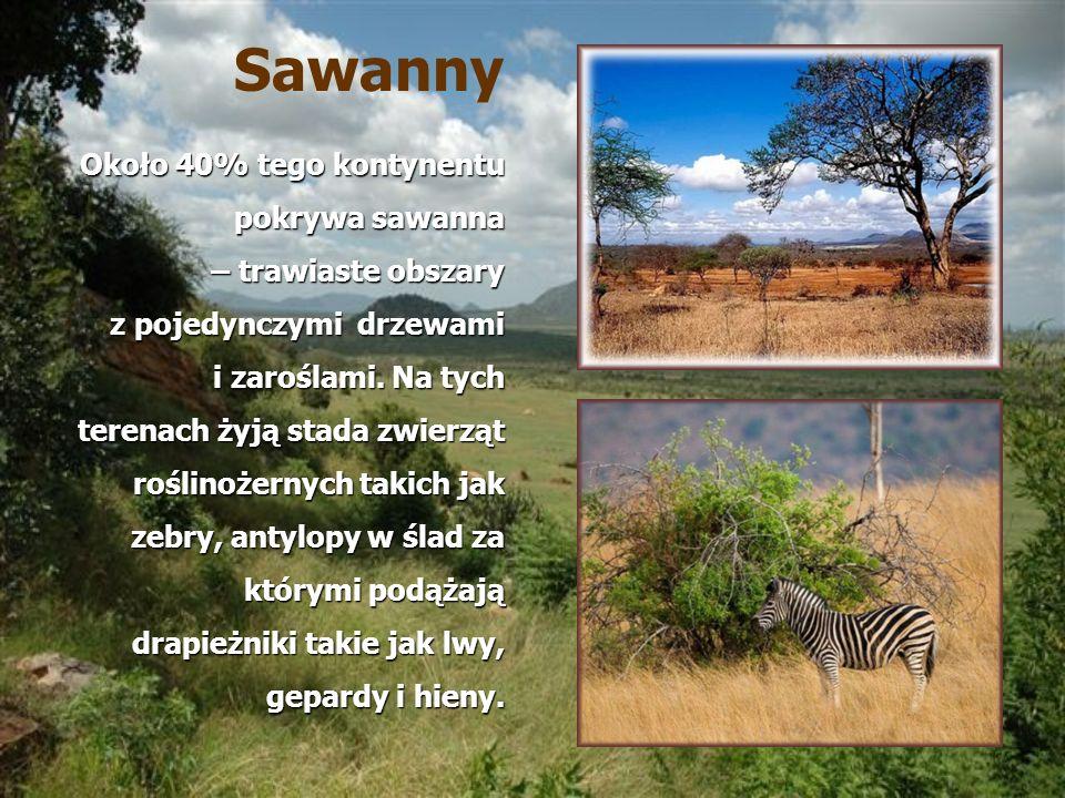 Sawanny Około 40% tego kontynentu pokrywa sawanna – trawiaste obszary z pojedynczymi drzewami i zaroślami. Na tych terenach żyją stada zwierząt roślin