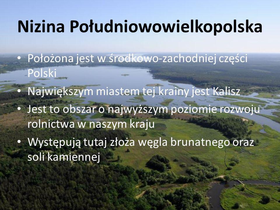 Nizina Południowowielkopolska Położona jest w środkowo-zachodniej części Polski Największym miastem tej krainy jest Kalisz Jest to obszar o najwyższym