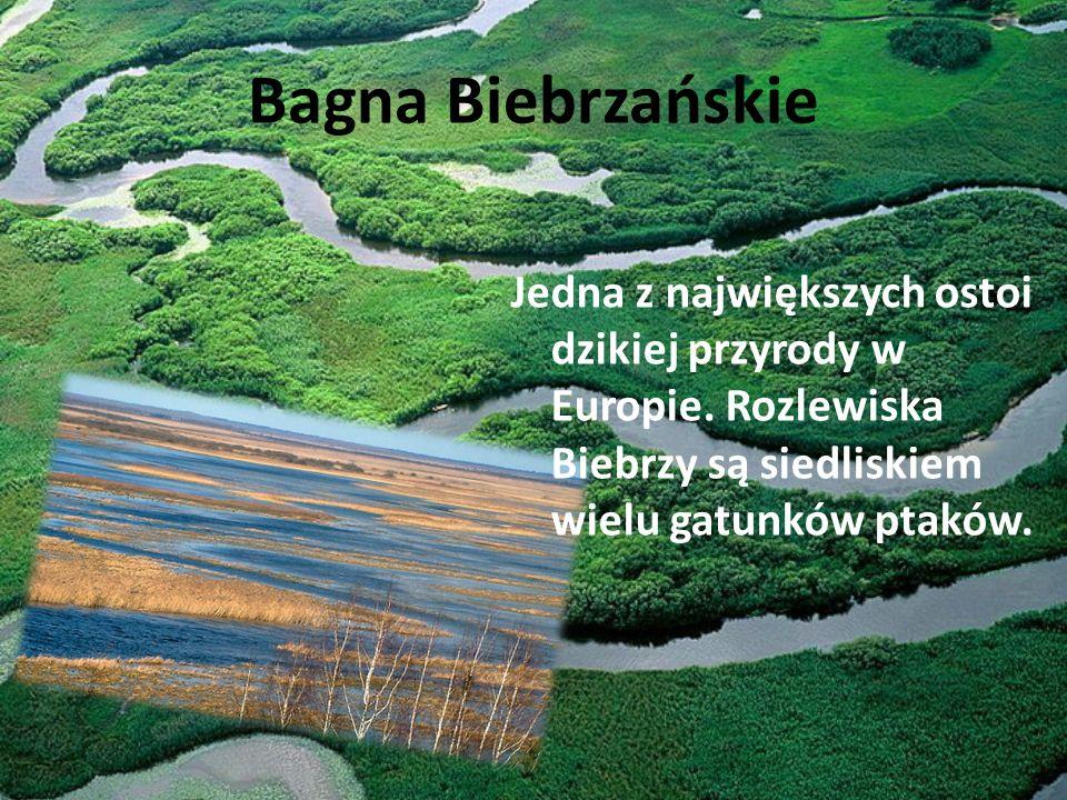 Bagna Biebrzańskie Jedna z największych ostoi dzikiej przyrody w Europie. Rozlewiska Biebrzy są siedliskiem wielu gatunków ptaków.