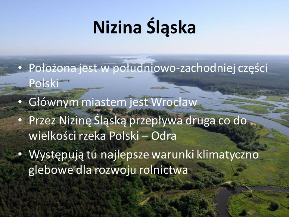 Nizina Śląska Położona jest w południowo-zachodniej części Polski Głównym miastem jest Wrocław Przez Nizinę Śląską przepływa druga co do wielkości rze