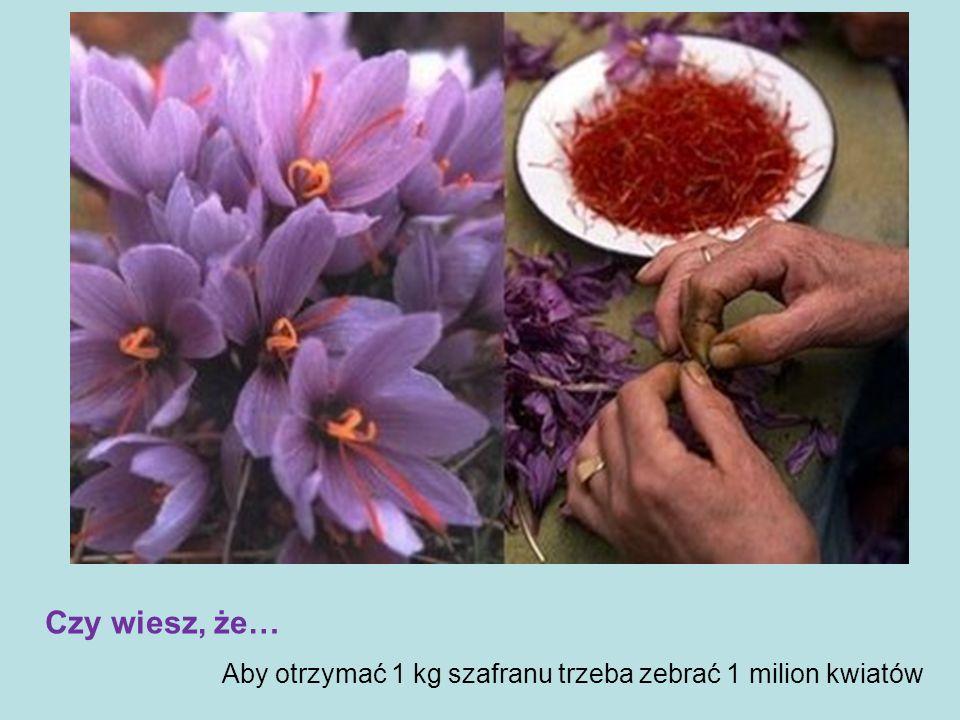 Aby otrzymać 1 kg szafranu trzeba zebrać 1 milion kwiatów Czy wiesz, że…