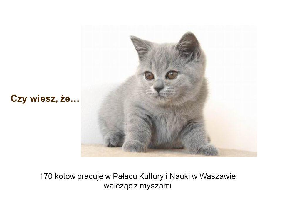 170 kotów pracuje w Pałacu Kultury i Nauki w Waszawie walcząc z myszami Czy wiesz, że…
