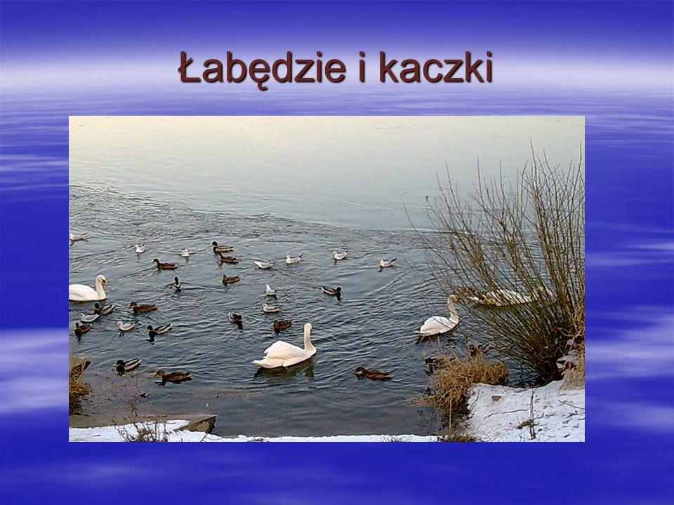 ZIMA Białe śnieżynki lecą z nieba, Jak jesienne liście z drzewa.