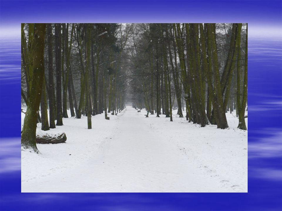ZIMA Gdy zima śniegiem prószy, marzną nosy i uszy, lecz my szaliki mamy i mrozom się nie damy.