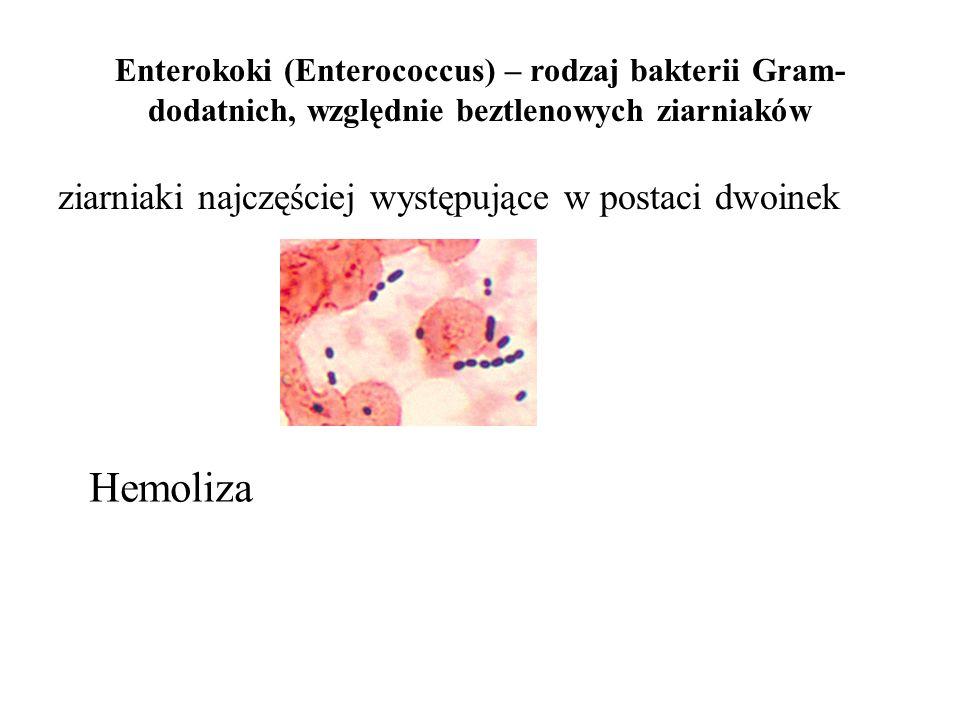 Enterokoki (Enterococcus) – rodzaj bakterii Gram- dodatnich, względnie beztlenowych ziarniaków ziarniaki najczęściej występujące w postaci dwoinek Hem