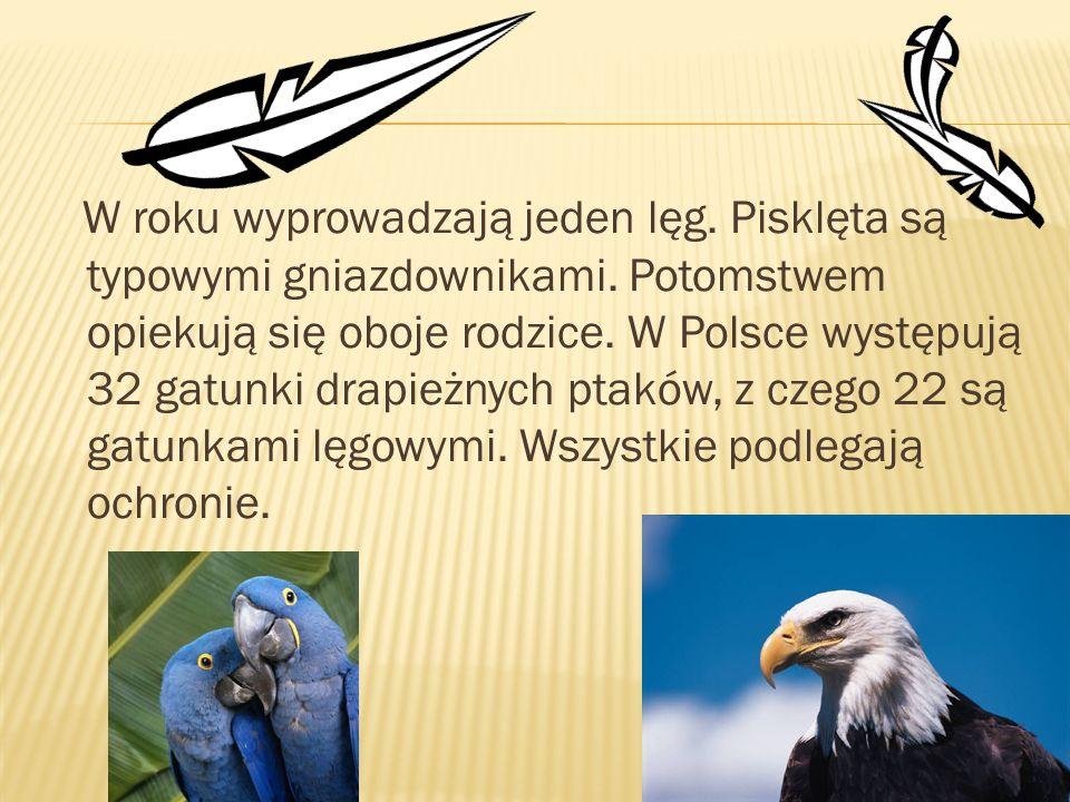W roku wyprowadzają jeden lęg. Pisklęta są typowymi gniazdownikami. Potomstwem opiekują się oboje rodzice. W Polsce występują 32 gatunki drapieżnych p