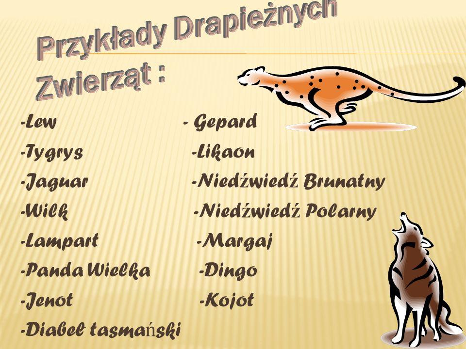 -Lew - Gepard -Tygrys -Likaon -Jaguar -Nied ź wied ź Brunatny -Wilk -Nied ź wied ź Polarny -Lampart -Margaj -Panda Wielka -Dingo -Jenot -Kojot -Diabeł