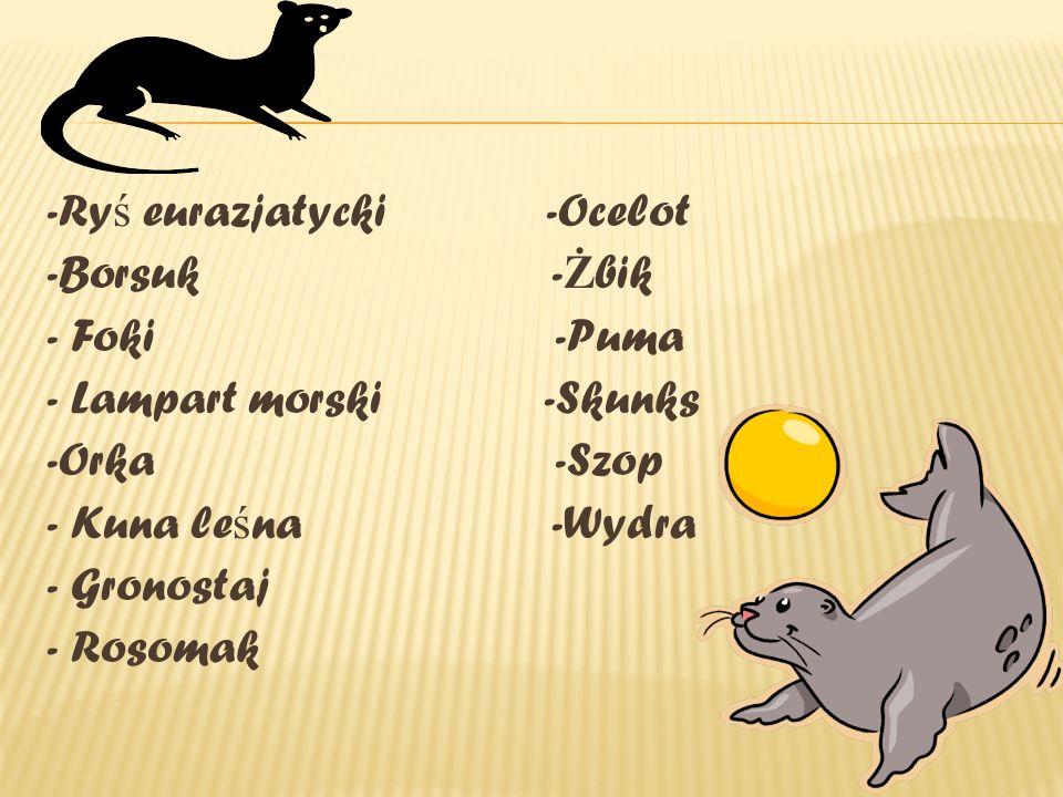 -Ry ś eurazjatycki -Ocelot -Borsuk - Ż bik - Foki -Puma - Lampart morski -Skunks -Orka -Szop - Kuna le ś na -Wydra - Gronostaj - Rosomak