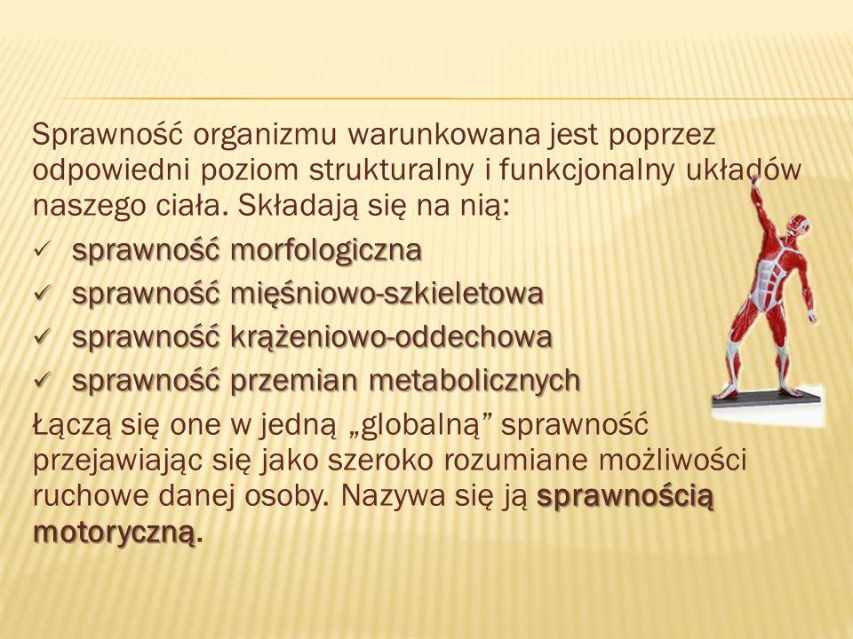 Sprawność organizmu warunkowana jest poprzez odpowiedni poziom strukturalny i funkcjonalny układów naszego ciała.
